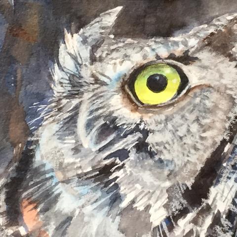 Western Screech Owl - 2018
