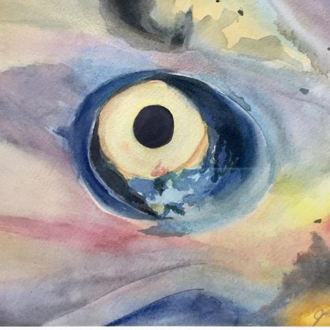 Eye of a King - 2017