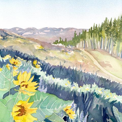 Arrowleaf Balsamroot at Sun Mountain
