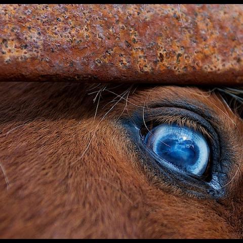 Bog Pony - Clifden, Ireland