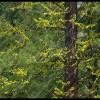 Impervious - Loup Loup Summit, WA