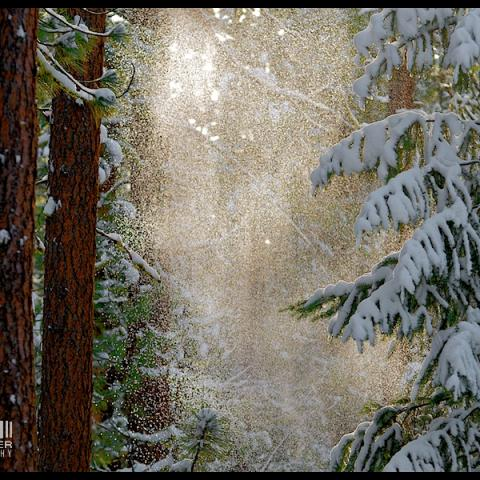 Confetti - Boulder Creek, WA