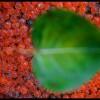 Roe & Leaf - Methow, WA