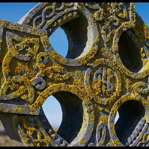 Irish Lichen - Omey Island, Ireland