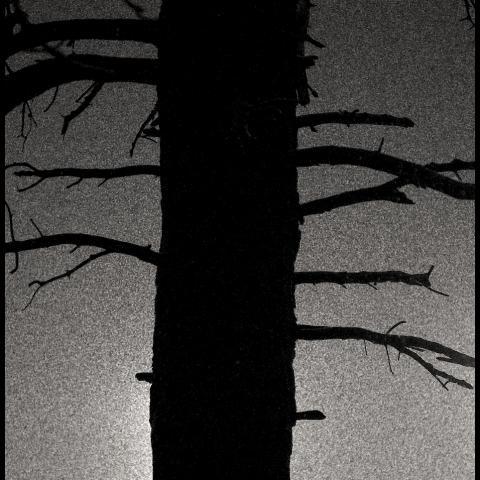 Silhouette snowfall - Winthrop, WA