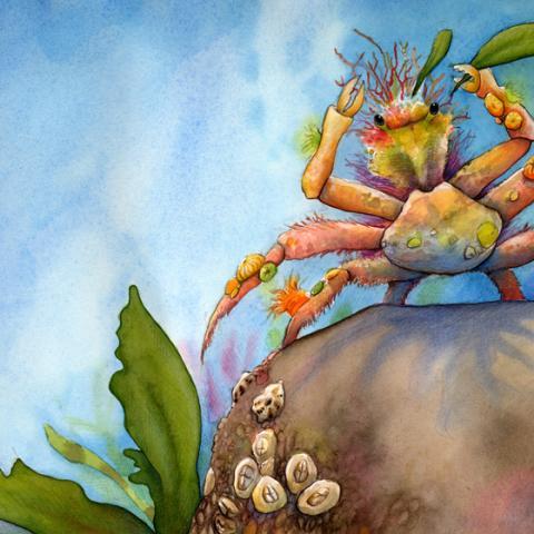 Sea Star Wishes: Decorator Crab