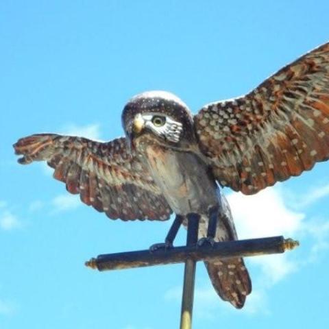 Northern Pygmy owl