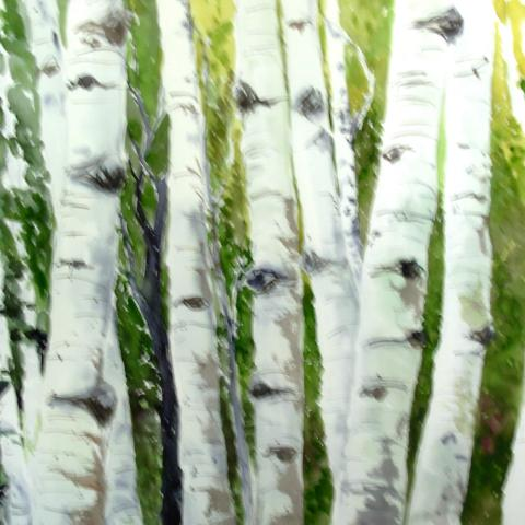 Aspens in the series