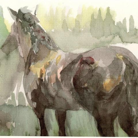 horses butt